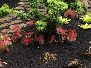 mulch around your garden will keep soil healthy and look great