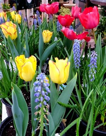 Spring Garden Color